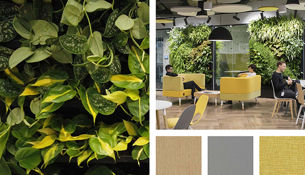 An inspirational picture of nature in a biophilic office.